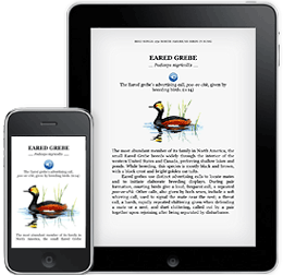How to Recover Deleted Kindle Books on iPad iPhone?